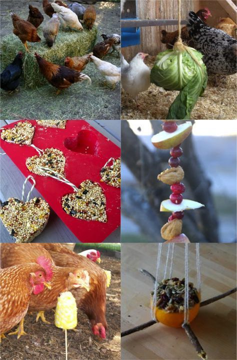 diy chicken toys